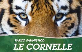 cornelle
